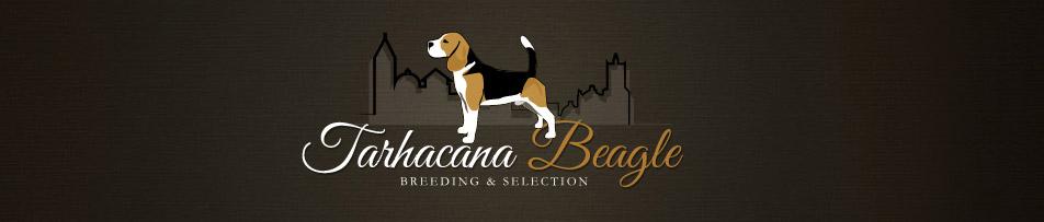 Tarbos Beagle