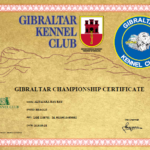 CAMPEON GIBRALTAR