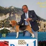 hembra-beagle-mary