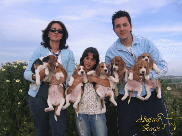 tarhacana-beagle-emmanuel
