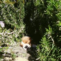 beagles4